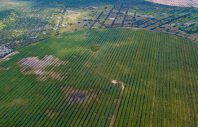 (190213) -- BEIJING, Feb. 13, 2019 (Xinhua) --     Aerial photo taken on Aug. 1, 2018 shows sea-buckthorn forests planted at the Kubuqi Desert in Dalate Banner, north China's Inner Mongolia Autonomous Region.     (Xinhua/Zhang Shanchen)